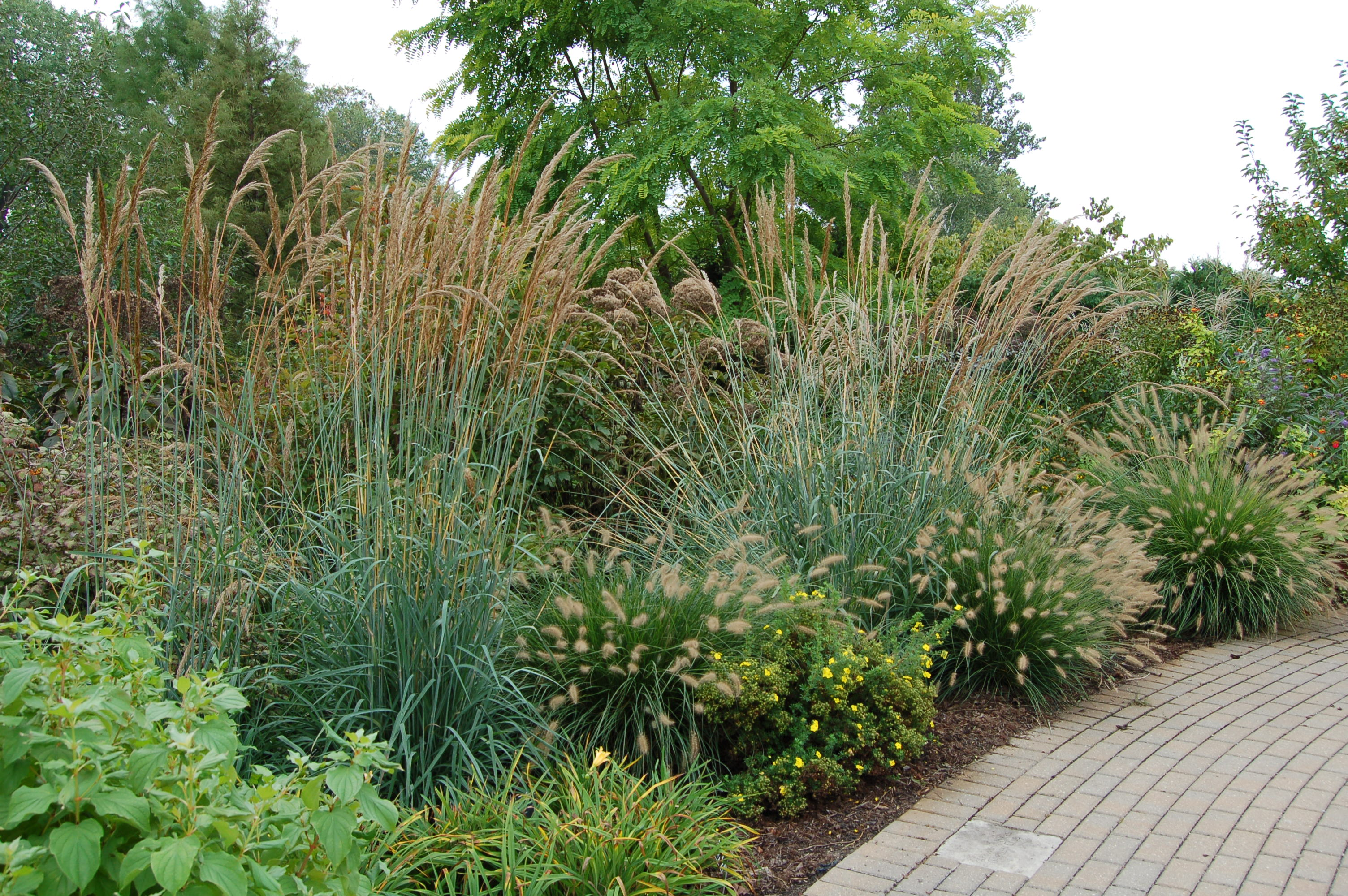 Landscaping Ideas 10 Favorite Ornamental Grasses For